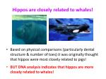 hippos are closely related to whales