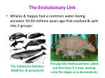 the evolutionary link