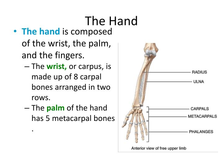 the hand n.