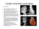 cardiac chambers and valves