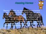 amazing horses