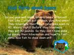 cool facts about bears