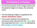 development of hindgut