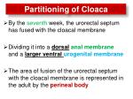 partitioning of cloaca