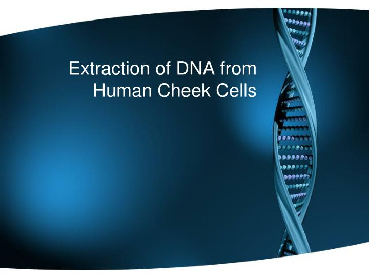 extraction of dna from human cheek cells n.