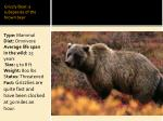 grizzly bear a subspecies of the brown bear