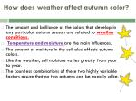 how does weather affect autumn color