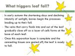 what triggers leaf fall