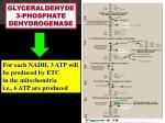 glyceraldehyde 3 phosphate dehydrogenase