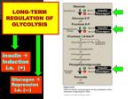 long term regulation of glycolysis