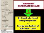 phospho glycerate kinase