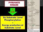 pyruvate kinase