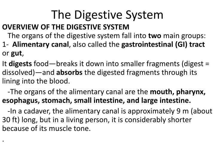 the digestive system n.
