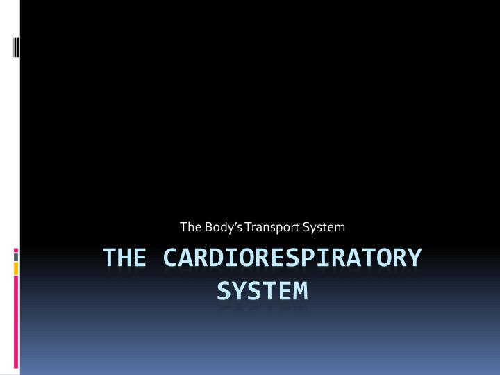 the body s transport system n.