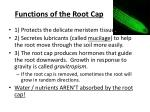 functions of the root cap