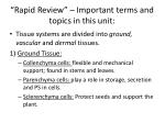 rapid review important terms and topics in this unit