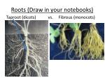 roots draw in your notebooks