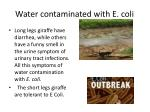 water contaminated with e coli