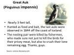great auk pinguinu s impennis