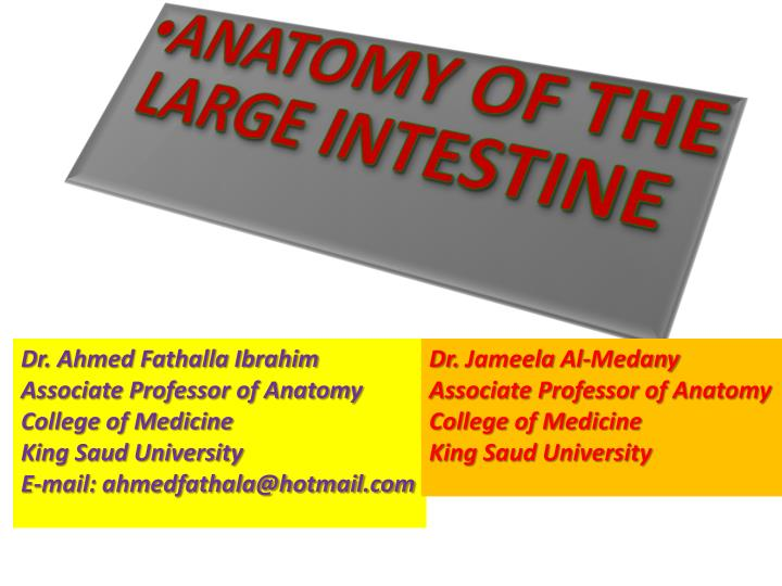 PPT - ANATOMY OF THE LARGE INTESTINE PowerPoint Presentation