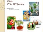 week 1 7 th to 10 th january