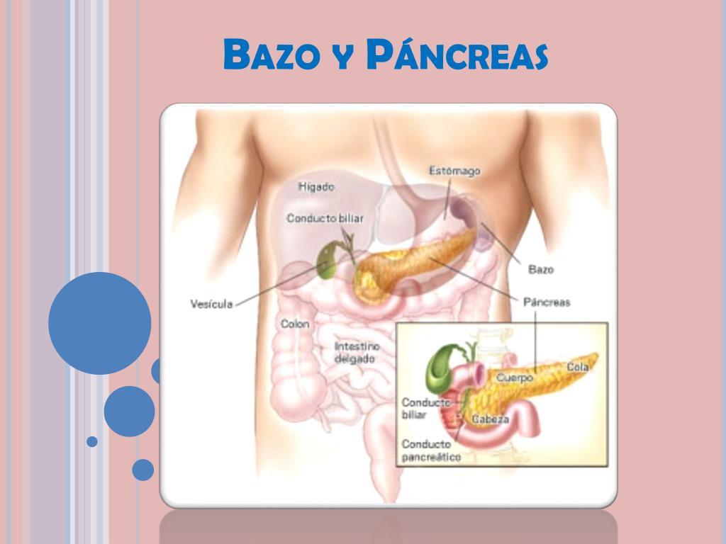 PPT - Bazo y Páncreas PowerPoint Presentation - ID:2121682