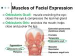 muscles of facial expression1
