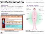 sex determination2