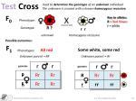 test cross1