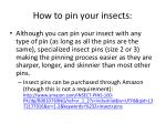 how to pin your insects3