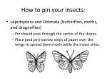 how to pin your insects8