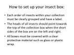 how to set up your insect box1