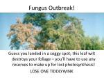 fungus outbreak