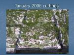 january 2006 cuttings