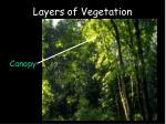 layers of vegetation