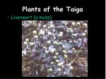 plants of the taiga4