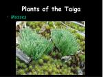 plants of the taiga5