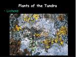 plants of the tundra2
