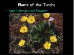 plants of the tundra5