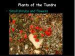plants of the tundra6