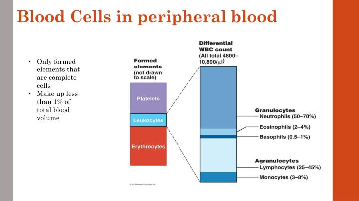 Blood Cells in peripheral blood
