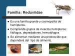familia reduviidae