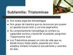 subfamilia triatominae