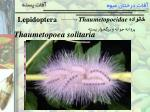 lepidoptera1