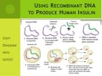 using recombinant dna to produce human insulin