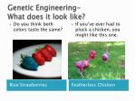 genetic engineering what does it look like