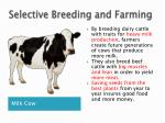 selective breeding and farming
