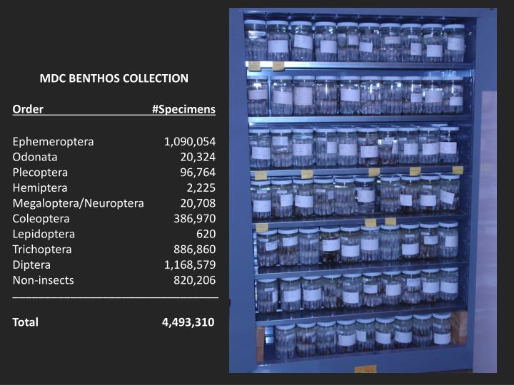 MDC BENTHOS COLLECTION