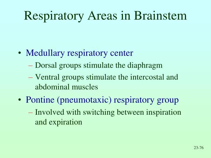 Respiratory Areas in Brainstem