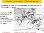 the action is at the heme or fe porphyrin molecule